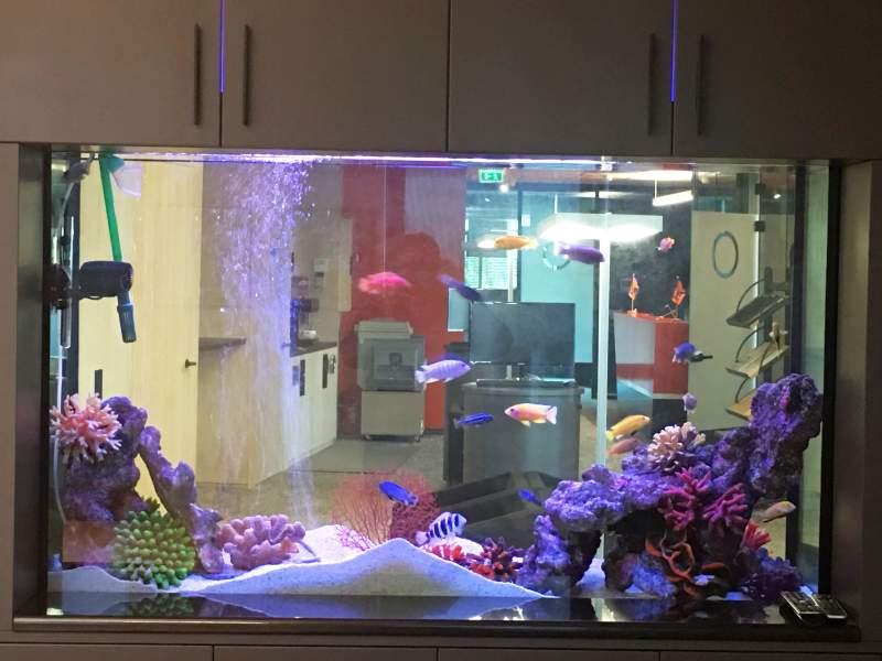 09_aquarium